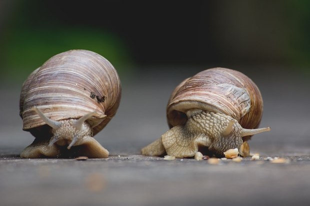 Typowa rozrywka pod Pochylcem - wyścigi ślimaków